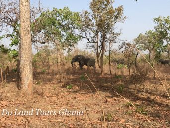 Friends of Nature & Wildlife